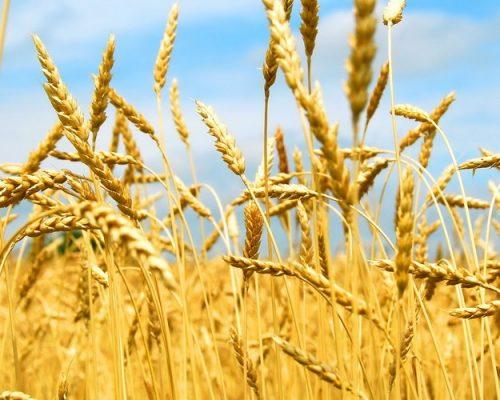 Про ситуацію в аграрному секторі району