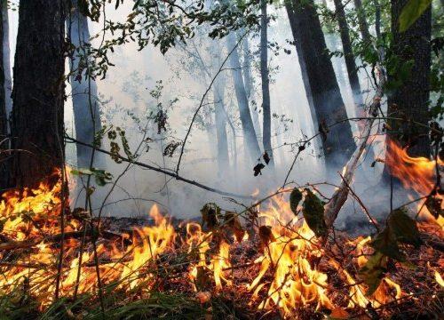 Увага! У Житомирському районі високий рівень пожежної небезпеки