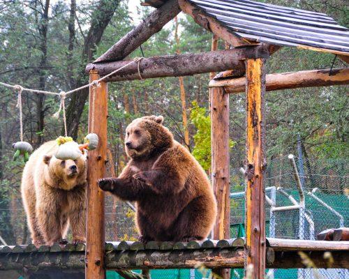 Проведено нараду щодо збереження центру реабілітації ведмедів