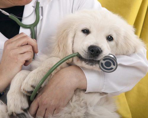Працівники ветеринарної медицини сьогодні відзначають своє професійне свято